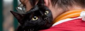 Влияют ли кошки на микроклимат в семье
